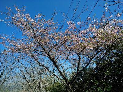 鹿児島はもう春