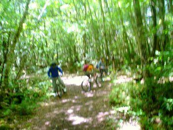 富士樹海サイクリング