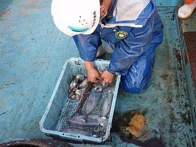 定置網漁業体験